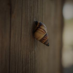 Snail on a Wooden Rail