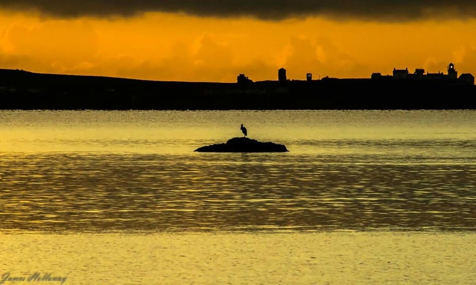 A heron waiting for the first rays of light this morning on a walk.