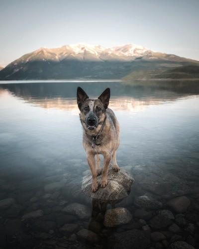 Roxy at Twin Lakes