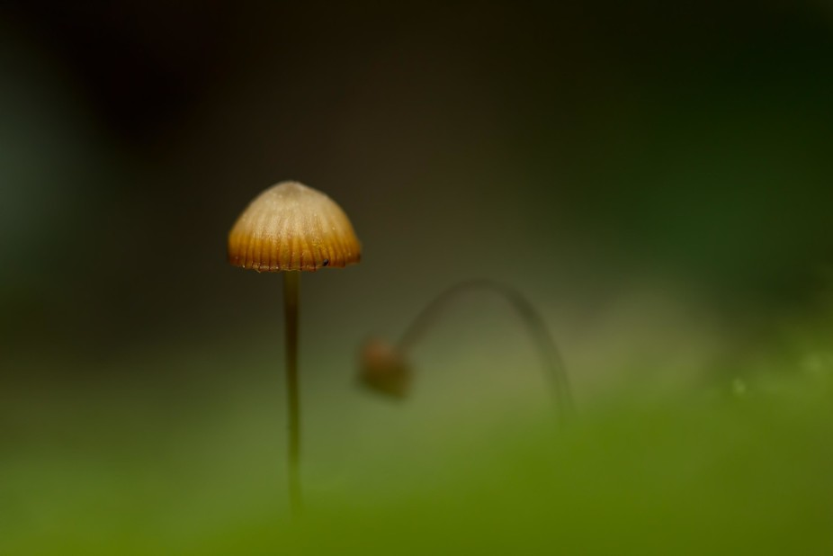 Single small mushroom growing from diffuse moss