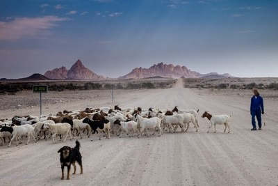 Sheppard with dog and flock near Spitzkoppe. Namibia