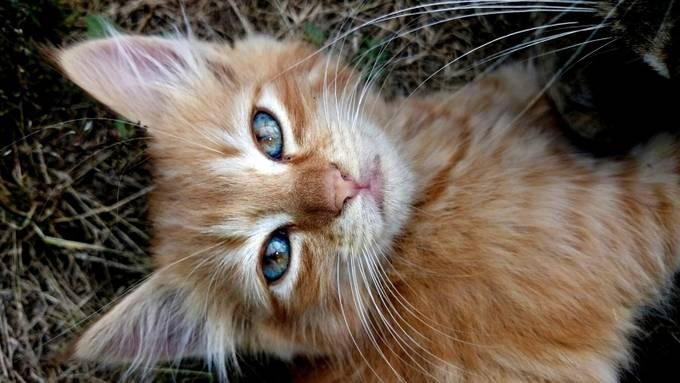 Orange kitten with beautiful eyes