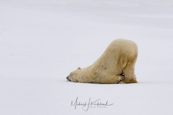 SlidingBear by mjkirkland - Subjects On The Ground Photo Contest