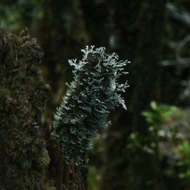 Interesting lichen