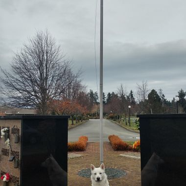 REFLECTIONS - Mowgli at center - taken at Yates Cemetery on November 11th, 2017 REMEMBRANCE DAY
