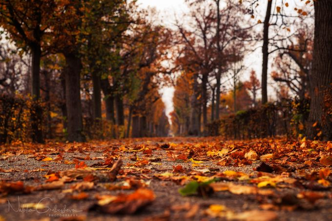 Road to autumn by tiger_in_teapot - Promenades And Boardwalks Photo Contest