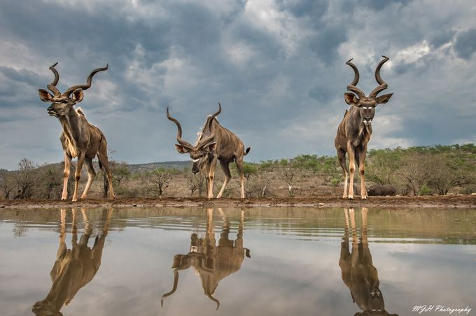 Kudu by mikehodgson - Explore Africa Photo Contest