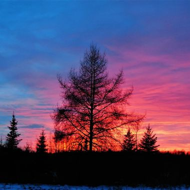 Taken on the Galvin Line at sunset Northern Mn. Nikon 6500