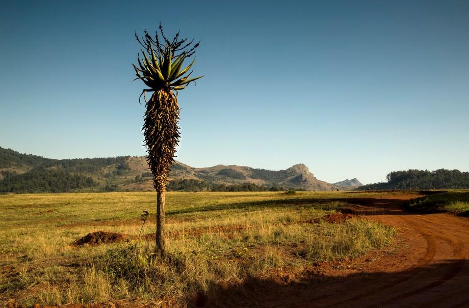 A view of Mlilwane nature sanctuary
