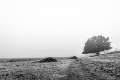 Driessenven In The Mist