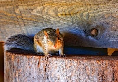 3NMr. Squirrel