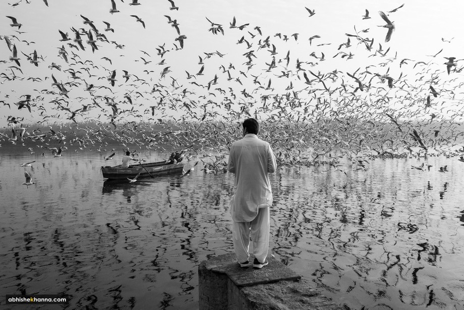 A man feeds the migratory gulls on the banks of river Yamuna in New Delhi, India