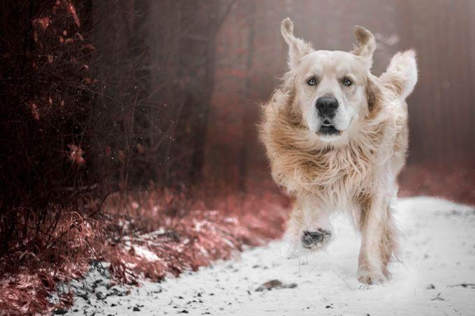 Morsiczek by kasiadoroszkiewicz - Running Photo Contest