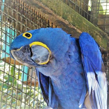 This beautiful blue parrot had a great sense of humour and loved his cheeky attitude made me laugh !