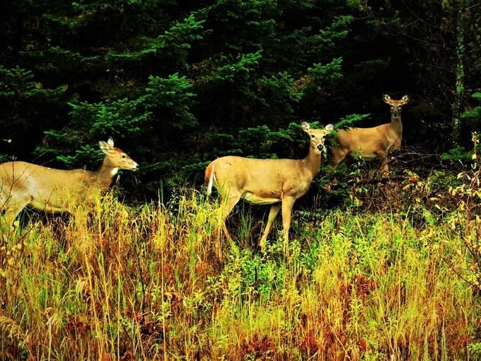 Taken on the road to Voyageurs Nat'l Park Visitors Center Nikon Coolpix 6500