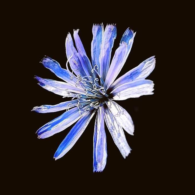 Beautiful flower wallpaper for galaxy s7 edge.