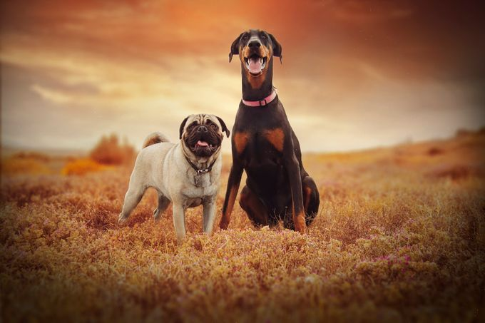 Gizmo and Khalu by lujeanburger - Covers Photo Contest Vol 43