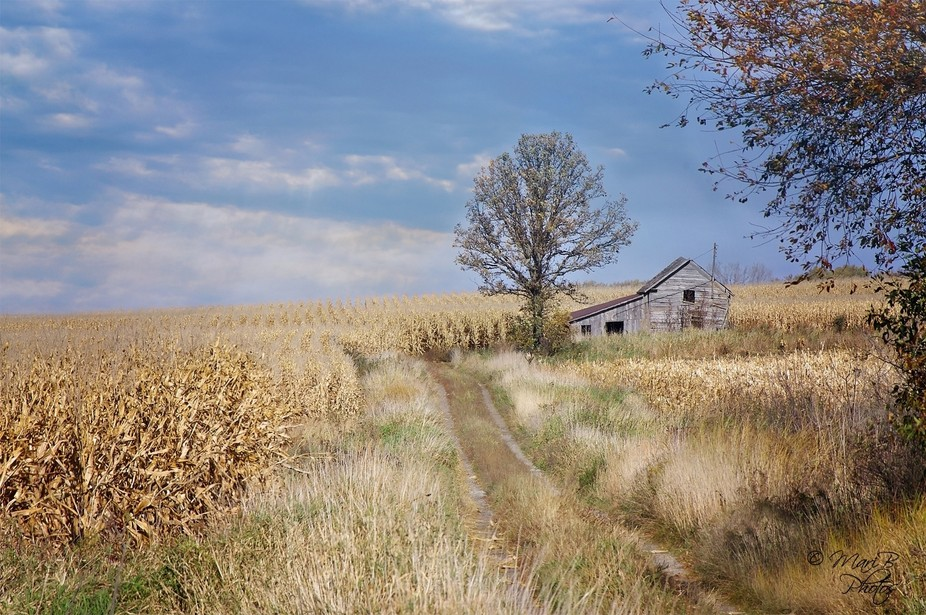 I absolutely love shooting this old farmstead. Drive past it all the time and fell in love. I too...