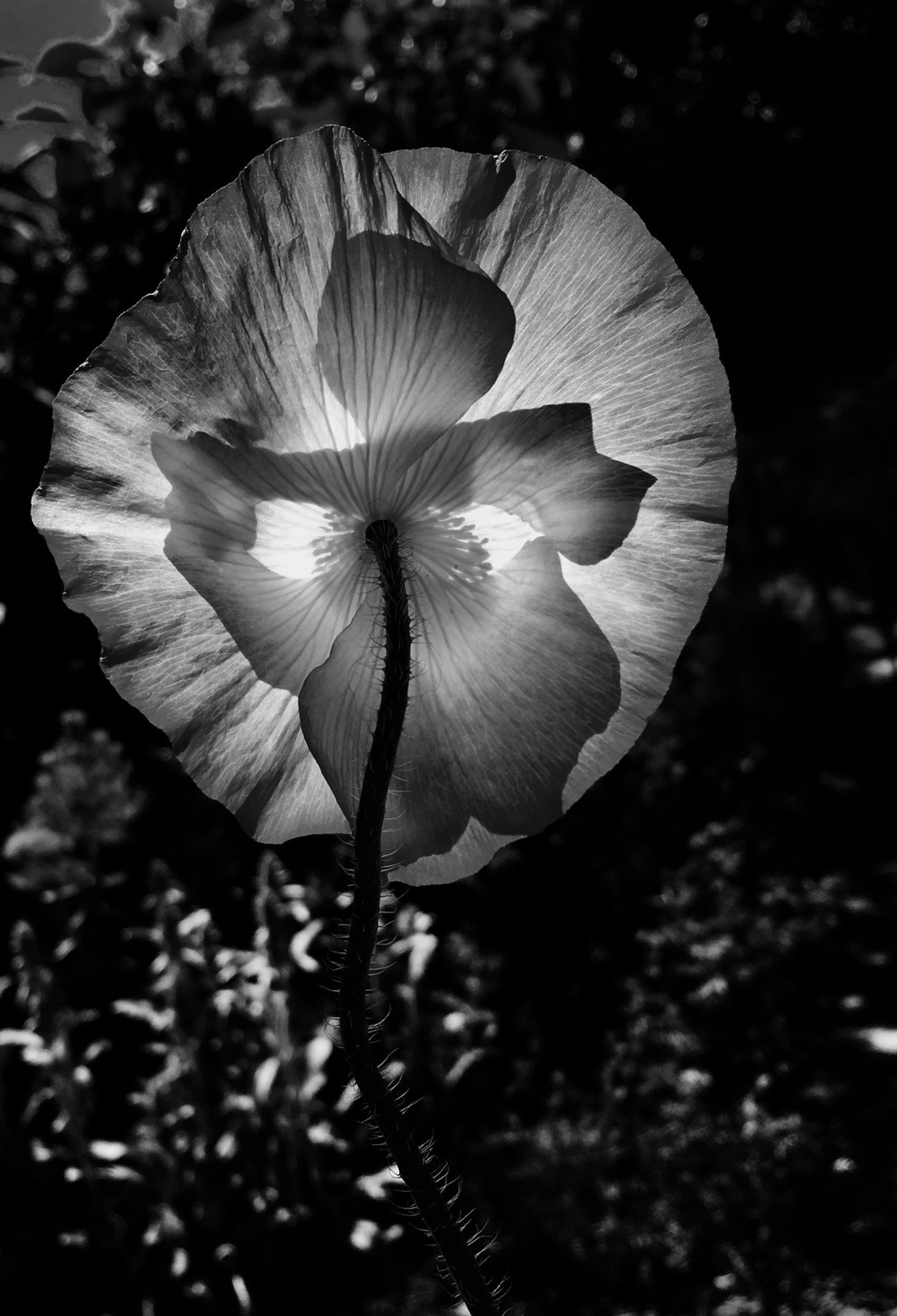 Transparent Flower