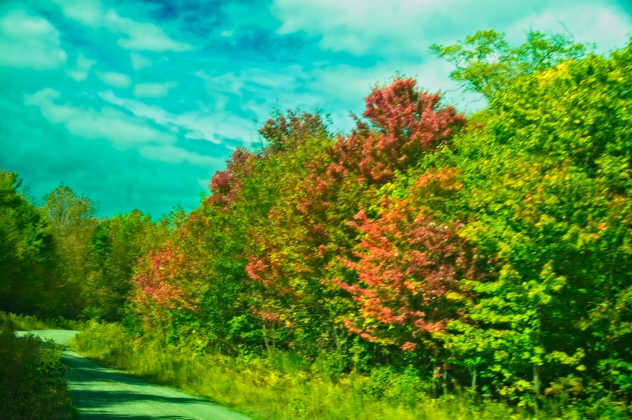 Colorful foliage along the side of an old logging road.