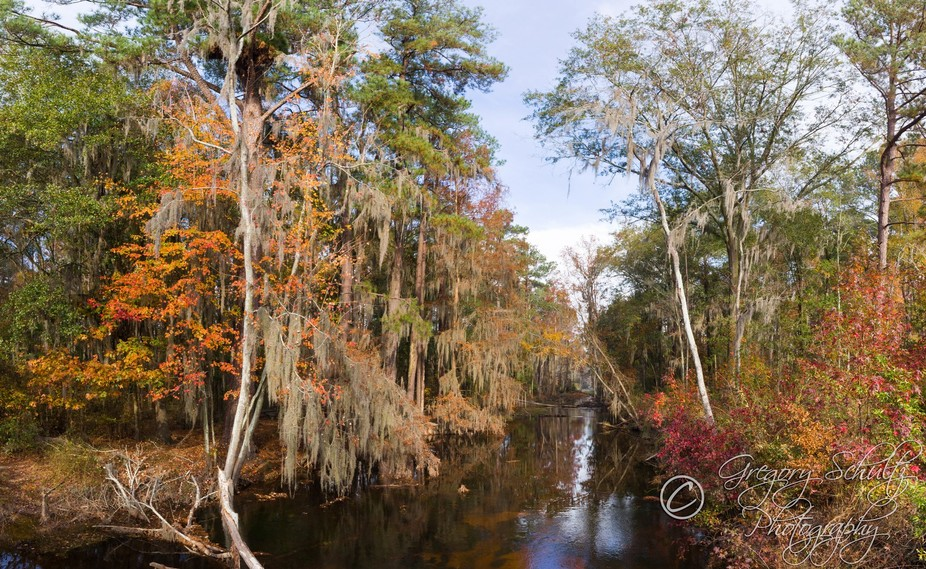 Fall colors paint the trees in Phinizy Swamp in a palette of reds, oranges, and yellows.