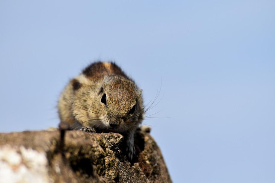 Squirrel in wild
