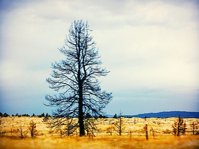 Lone tree and a dead one at that