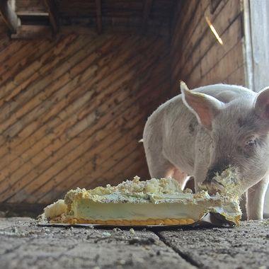 Birthday cake and piggy.
