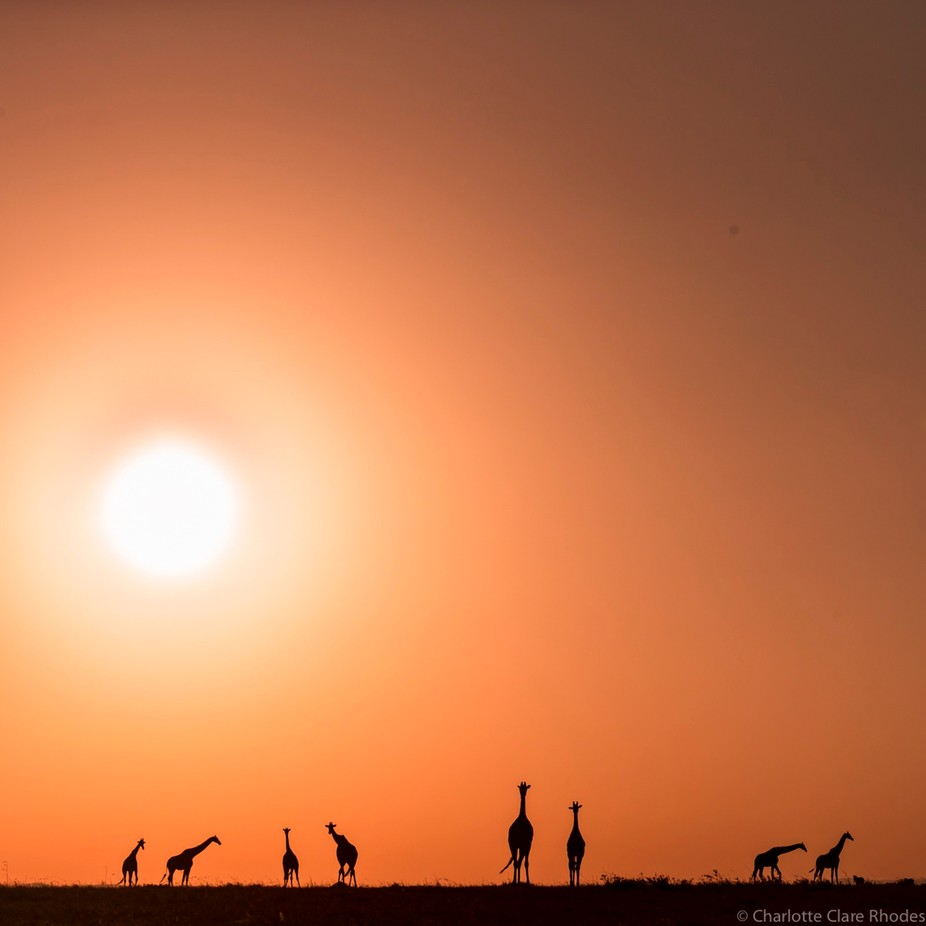 A (Miniature) Tower Of Giraffes by charlotterhodes - Explore Africa Photo Contest