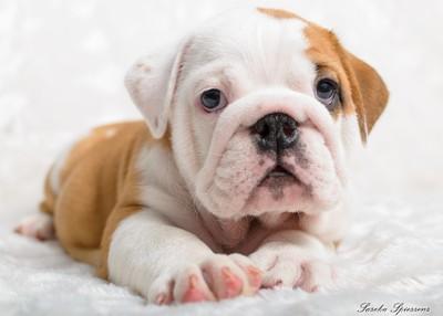 Puppy Nougat London