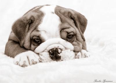 Puppy Neil Brown