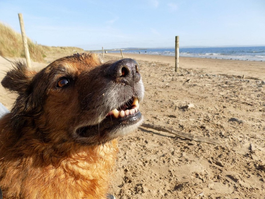Miller chilling at saltcoats beach