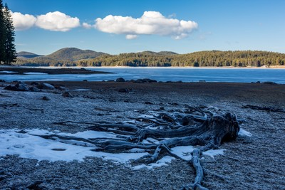 Dead roots of pine tree covered in ice at winter, landscape, Shiroka Polyana lake