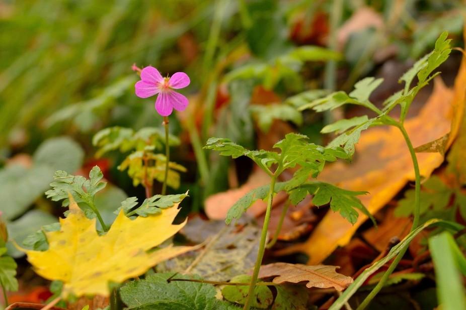 Jesienne kwiatki z zeszłej niedzieli.