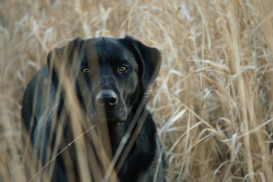"""My Dog Gus"""