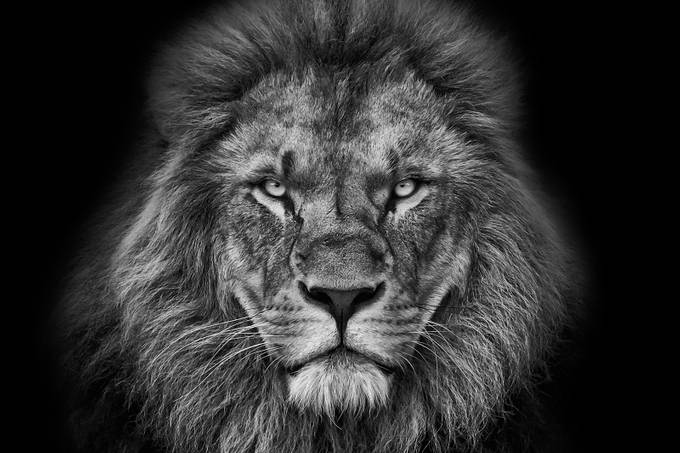 Kings face by christophreiter - Explore Africa Photo Contest