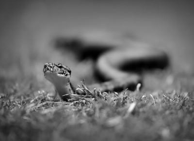 scary snake