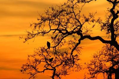 Sunset Hawks