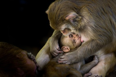 Harmony of Mother and Child