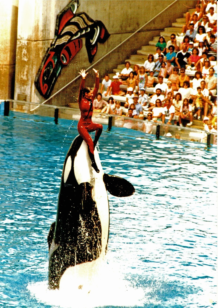 When Sea world had the full Orca show. Never to be seen again.