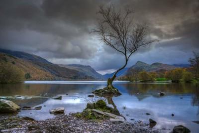 "The "" lone tree "" llanberis, snowdonia"