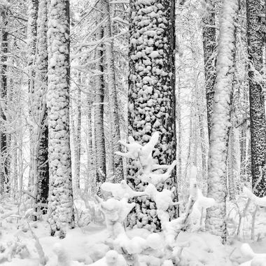 """Our first snowfall in Itasca Park, Minnesota, USA.  Copyright Notice: ALL IMAGES on this web site are protected by the U.S. and international copyright laws, all rights reserved. The image may not copied, reproduced, manipulated, or used in any way, without written permission of Jelieta Walinski Ph.D, & Walinski's Inner Vission Photography a licensed owner. Any unauthorized usage will be prosecuted to the full extent of US Copyright Law.  Ang larawan na ito ay copyrighted kaya huwag mag-atubiling kopyahin, o """"mag-screenshot"""", huwag imanipula, at aangkinin.Alalahanin na araw-araw ko minomonitor ang mga larawan mo..   'STEALING IS A CRIME!"""""""