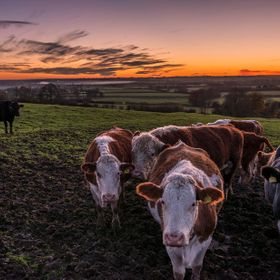 These lovely ladies were more interested in me than the beautiful sunset colours behind them!!