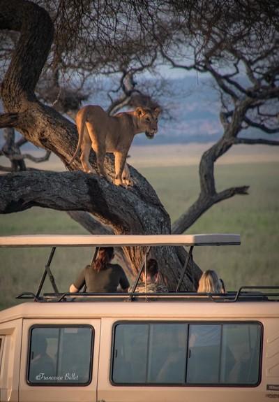 Tanzania - Tarangire Park
