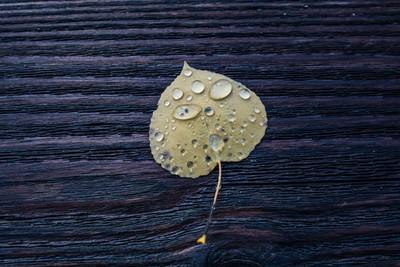 Raindrops on a fallen leaf.