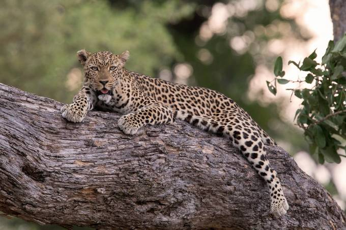 Relaxing by thomasretterath - Image Of The Month Photo Contest Vol 28