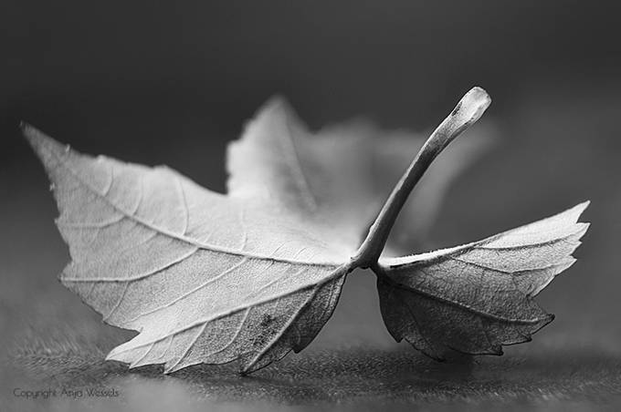Monochrome fall by AnjaWessels - Social Exposure Photo Contest Vol 13