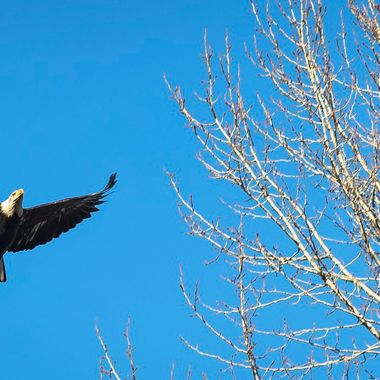 just walking with Camera along side the river. Caught this gorgeous bird flying right over head.