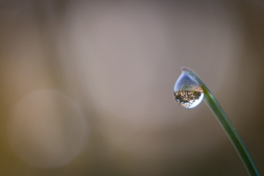 the world and sky refracted in a raindrop