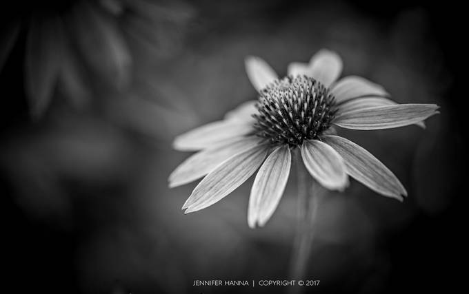 Colorblind by JenniferHannaPhotography - Monochrome Creative Compositions Photo Contest